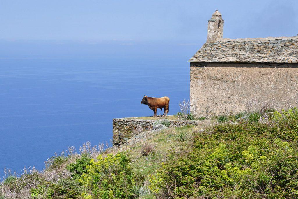 1er : Le taureau de Sainte-Catherine